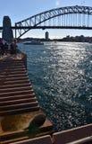 Guarnizione di pelliccia della Nuova Zelanda che prende il sole sui punti di Sydney Opera House Fotografie Stock