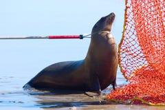 Guarnizione di porto salvata Fotografia Stock Libera da Diritti