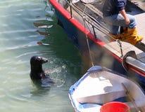 Guarnizione e peschereccio Fotografia Stock Libera da Diritti