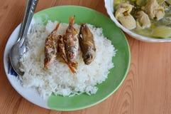 Guarnizione fritta nel grasso bollente del pesce sul riso e sul cavolo cinese marinato con la minestra delle interiora della carn immagine stock