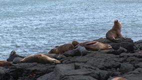 Guarnizione sulla spiaggia Galapagos archivi video