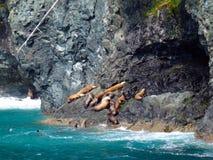Guarnizioni che nuotano e che prendono il sole nell'Alaska Immagine Stock Libera da Diritti