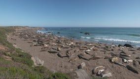Guarnizioni di elefante che mettono su litorale video d archivio
