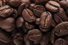 Guatemala asó los granos de café Fotografía de archivo libre de regalías