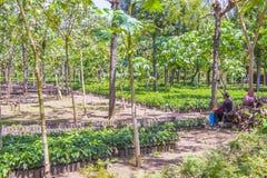 Free Guatemala Coffee Plantation Royalty Free Stock Photo - 58229685