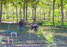 Free Guatemala Coffee Plantation Stock Photo - 58229710
