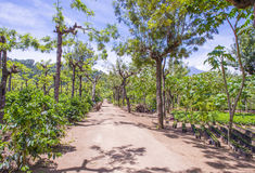 Guatemala coffee plantation Stock Photography