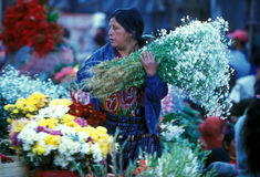 GUATEMALA DA AMÉRICA LATINA CHICHI Fotos de Stock
