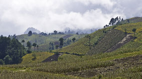 Guatemala-highland. Landscape with fields in the highlands of guatemala Stock Images