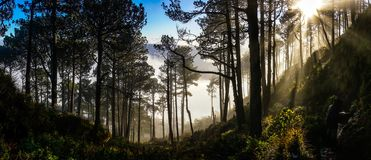 Guatemala Hiking in Forest, sun rays. Amazing lighting walking down from the volcano. Love the light rays stock photos
