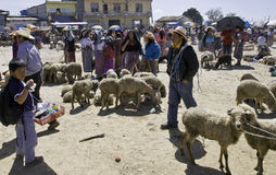 Guatemala - mercado de gado Foto de Stock Royalty Free
