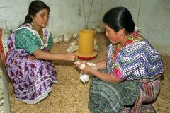 Guatemalan Indian women take care of chickens Royalty Free Stock Photo