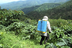 Farmer spraying coffee plants in mountain scenery. Guatemala, Quetzaltenango Department, Viejo Quetzal Village: On a steep coffee plantation in the mountains is royalty free stock image