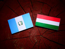 Guatemalan flag with Hungarian flag on a tree stump isolated Royalty Free Stock Photography
