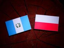 Guatemalan flag with Polish flag on a tree stump isolated. Guatemalan flag with Polish flag on a tree stump royalty free illustration