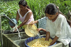 Guatemalans wash and soak corn in sink. Guatemala, department Alto Verapaz, San Cristobal village: in the mountains around Coban is the main food of the Indian Royalty Free Stock Photo