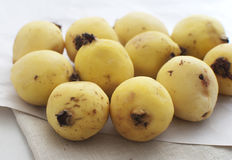 guava зрелый Стоковое Фото