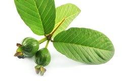 Guava и листья Стоковое Изображение