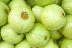 guava тропический Стоковые Фото
