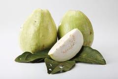 guava arkivfoto