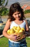 Guava Стоковое Изображение RF