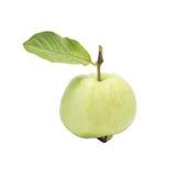 Guava Zdjęcia Stock