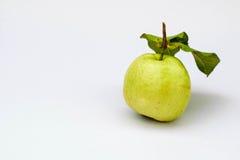Guava royaltyfria foton