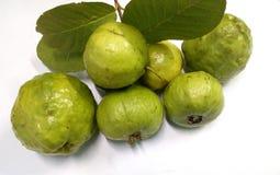 Guava Fotografering för Bildbyråer