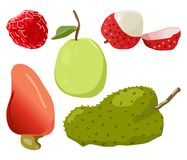 Guava, Agathis Lalillardieri, raspberry, Lici, Soursop Royalty Free Stock Image