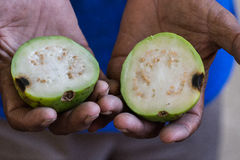 Guava cut in half royalty free stock photography