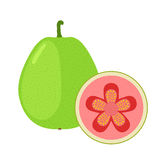 Guava exotic fruit whole, slice in flat cartoon  style. Stock Photo