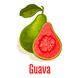 Guava fresh juicy tropical fruit vector icon Stock Image