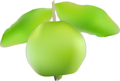 Guava Fruit. Illustration Of Guava Fruit Fruit with a leaves Stock Images