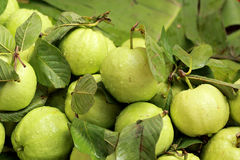 Guava fruit in the market Stock Photos