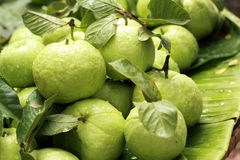 Guava fruit in the market Stock Photography