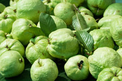 Guava fruit in the market Royalty Free Stock Image
