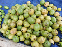 Guava Fruit market Royalty Free Stock Photos