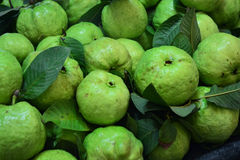 Guava fruit. Is one of the popular tropical fruits rich in vitamin C Royalty Free Stock Photography