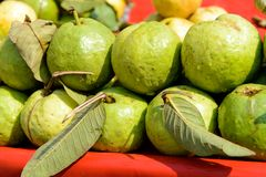 Guava fruit Stock Photography