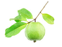 Guava Fruit Royalty Free Stock Images
