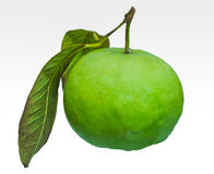 Guava fruit. Stock Images