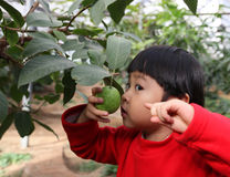 Guava and girl Stock Photo