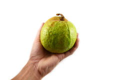 Guava on hand Stock Image