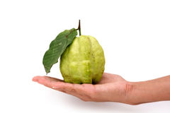 Guava in hand Royalty Free Stock Photos