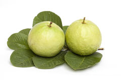 Guava isolated Stock Photography