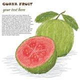 Guava owoc Zdjęcie Stock