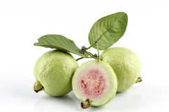 Guava (Psidium guajava Linn.) Stock Photo