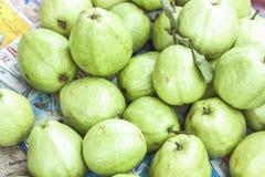 Guava Psidium guajava Royalty Free Stock Photo