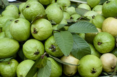 Guava richer vitamin C than orange. Guava are rich in dietary fiber,vitamins, and vitamins. Life in tropic and subtropic climate. Usually adds as a mix element Stock Photo