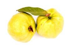 Guava som isoleras in på vit Arkivfoton